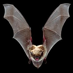 Fun facts about bats