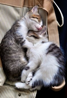 The Cuddly Snuggly Kittens via Love Meow ~ Sweet Dreams beautiful friends ♥