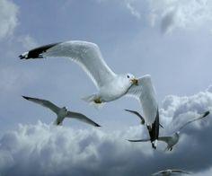 seagulls in flight | seagulls in flight, animals, art, birbs, sea, seagulls, sky, water