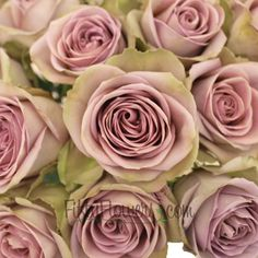Amnesia Lavender Rose - Amnesia is a mystifying bloom displaying silvery lavender petals with pale green on its outer guards. Blend this rose with purple lisianthus for an antique feel!