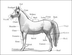 Identifying Horse Parts and Markings