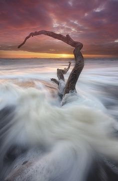 ~~lone tree branch, beach sunset, San Francisco by Alan Chan Photography~~