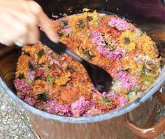 Dornröschen-Wolle: Färben mit Pflanzen