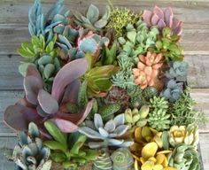 35 Indoor And Outdoor Succulent Garden Ideas - plants that might have a chance on my patio