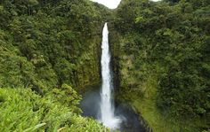 During your stay at our Hilo Hawaiian hotel, venture out to the famous Akaka Falls, an attraction the whole family will enjoy.