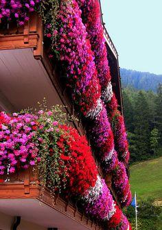 Südtirol; Dolomiten  floral balcony balcones con flores