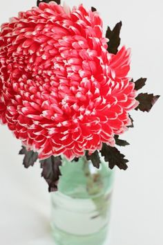 mint green bright pink dark brown color palette by Sarah Hearts My Flower, Beautiful Flowers, Beautiful Beautiful, Big Flowers, Dahlia Flowers, Birth Flower, Dahlias, Fresh Flowers, Bloom