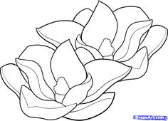 magnolia flowers drawings | How to Draw Magnolias, Magnolias, Step by Step, Flowers, Pop ...