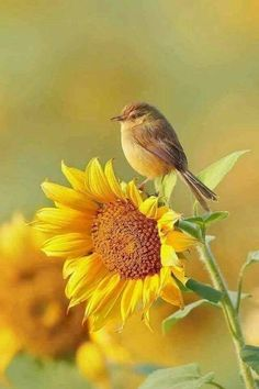 10 Beautiful plants to attract wild birds to your garden Sunflower Pictures, Bird Pictures, Nature Pictures, Pictures Of Flowers, Color Pictures, Most Beautiful Birds, Animals Beautiful, Beautiful Flowers, Animals Amazing