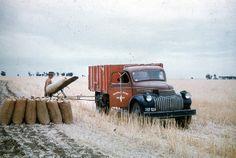 loading bagged wheat near Minyip ca 1950 Vintage Farm, Harvest Time, Victoria Australia, Antique Cars, Past, Explore, History, Farming, Nature