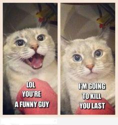 30 funny animal captions - part 7 pics) lol смешно, кот Funny Animal Pictures, Funny Photos, Funny Animals, Funniest Animals, Funniest Pictures, Cute Animals With Funny Captions, Hilarious Pictures, Humor Animal, Animal Memes