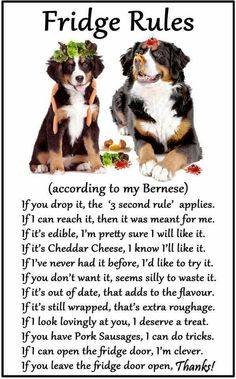 hiusan Bernese Mountain Dog Gift - Fridge Rules Funny Fridge Stickers Warning Stickers Peel and Stick Kitchen Home Decor 6 Bermese Mountain Dog, Mountain Dogs, I Love Dogs, Cute Dogs, Bernese Dog, Support Dog, Wolf Quotes, Dog Gifts, Funny Dogs