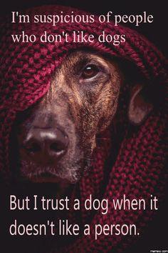 Sospecho de las personas que no le gustan los perros. Pero confío en un perro cuando no le gusta una persona.