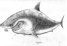 Disney Concepts & Stuff   Character Designs from Finding Nemo - Bruce
