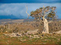 Pinnacles, Sapphire Coast, New South Wales, Australia - www.mr2percent.com