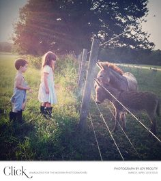 image copyright Joy Prouty http://wildflowersphotos.com/  My grandbabies fed our Donkey Spoty cookies all the time!