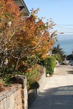 Fall in Sausalito - Marin County, CA