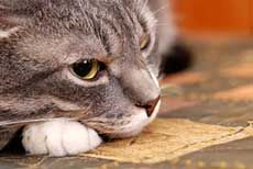 First Aid and Your Cat: What to Do in an Emergency | petocracy