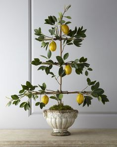 "For the ""Dream Room"" (Master Bedroom): Lemon Espalier Faux Arrangement by Florence de Dampierre at Horchow. Potted Fruit Trees, Espalier Fruit Trees, Trees To Plant, Lemon Tree Potted, Small Garden Images, Pot Plante, Garden Structures, Edible Garden, Mellow Yellow"