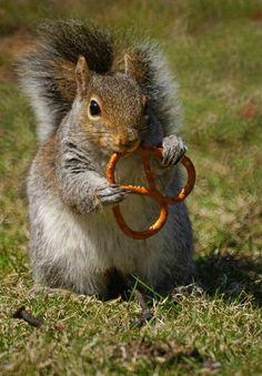 C'est l'heure de l'apéritif ! Baby Animals, Funny Animals, Animals And Pets, Cute Animals, Secret Squirrel, Cute Squirrel, Squirrels, Chipmunks, All Gods Creatures