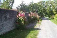 rose trémière -stokroos- La Charteuse , 2 m hoogte , voorzaaien in potjes na 4 blaadjes in volle grond uit de wind , zaaien in april , mei , juni en juli , volle zon