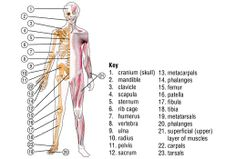 anatomy of body Body Name, Broadband Deals, Human Body Activities, Human Body Organs, Anatomy Images, Medical Careers, Scapula, Systems Biology, Human Anatomy And Physiology