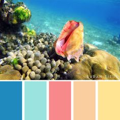 25 Summer Color Palettes (Sarah Titus ~ Saving Money Never Goes Out of Style) Coral Colour Palette, Summer Color Palettes, Color Schemes Colour Palettes, Summer Colors, Color Combos, Beach Color Schemes, Color Balance, Color Swatches, Color Inspiration