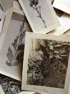 vintage garden photos l Gardenista