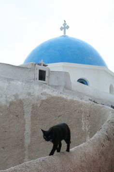 Image of Santorini Cats from the animal & insect photos of Dave. Groucho Marx, I Love Cats, Crazy Cats, Cute Cats, Funny Cats, Pretty Cats, Beautiful Cats, Kittens Cutest, Cats And Kittens