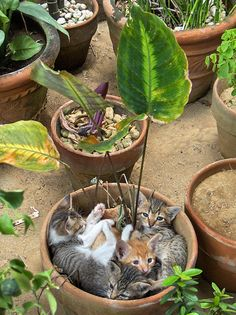Cute kittens in flower pot . Cute Kittens, Cats And Kittens, Kittens Playing, Animals And Pets, Baby Animals, Funny Animals, Cute Animals, Pretty Cats, Beautiful Cats
