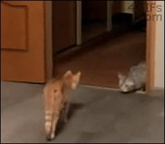 12 Funny Cat GIFs (Plus A Bonus Video - which might be the best part: Cat + Vacuum)