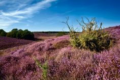 De veluwe in the Netherlands. Depends on the purpase of your photo witch light en time you should photograph it.