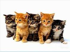 Resultado de imagem para gatos fofos