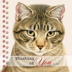 Greetingcard Thinking of You by Franciens katten