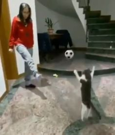 - My list of the most beautiful animals Funny Animal Videos, Cute Funny Animals, Funny Animal Pictures, Cute Baby Animals, Animal Memes, Funny Dogs, Animals And Pets, Cute Dogs, Cute Cats And Kittens