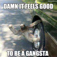 sloth memes | ... to be a gangsta you might also like 30 greatest sloth memes gifs and