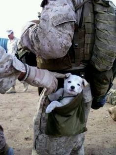 A soldier with a puppy. (: