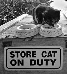 One of the store cats on duty at the Ragpicker on Ocracoke Island, NC. Lauren Garbacz photo. www.OcracokePetHomes.com--we saw this same cat at the store this summer!!