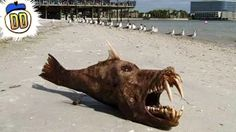 15 Weirdest Beaches on Earth by Danger Dolan YouTube