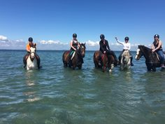 Horse riding vacations with Cooper's Hill Equine on the Wild Atlantic Way,West of Ireland. We organise hunting, trekking in the Burren, & beach riding. Trail Riding, Horse Riding, Irish Beach, Riding Holiday, Beach Rides, All The Pretty Horses, Horses For Sale, Show Jumping, Cob