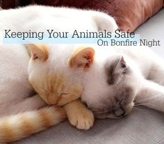 How To Keep Your Animals Safe On Bonfire Night | Abigail Kate