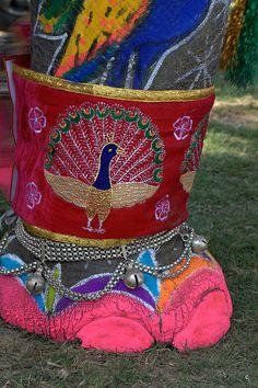 India ♡ Elephants ♡