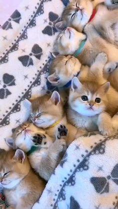 Cute little kittens ��