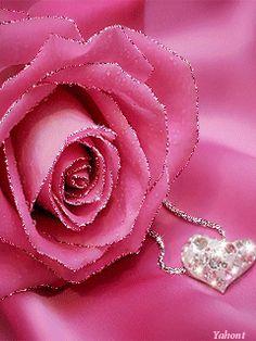 Tender roses for you Roses Gif, Flowers Gif, Pink Flowers, Beautiful Rose Flowers, Beautiful Gif, Gif Bonito, Flowers Black Background, Rose Flower Wallpaper, Gifs