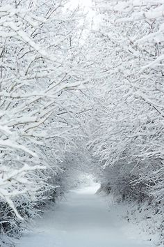 When the snow sticks to the tree branches-beautiful!