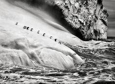 セバスチャン・サルガド-02.jpg  氷山上のペンギン, 南極近く、サウスサンドウィッチ諸島 2009