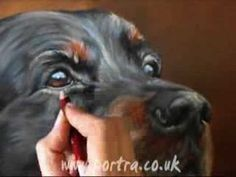 Speed painting dog portrait in pastel (Setter) - YouTube