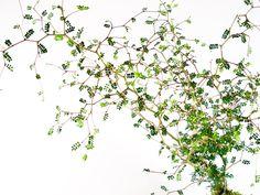 Kokedama Terrarium Plants, Green