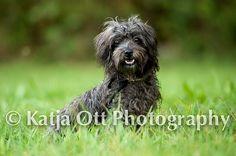 Hunde Foto: Claudia und Maxi - Fotomodell Hier Dein Bild hochladen: http://ichliebehunde.com/hund-des-tages  #hund #hunde #hundebild #hundebilder #dog #dogs #dogfun  #dogpic #dogpictures