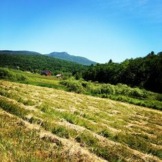 camels hump in june